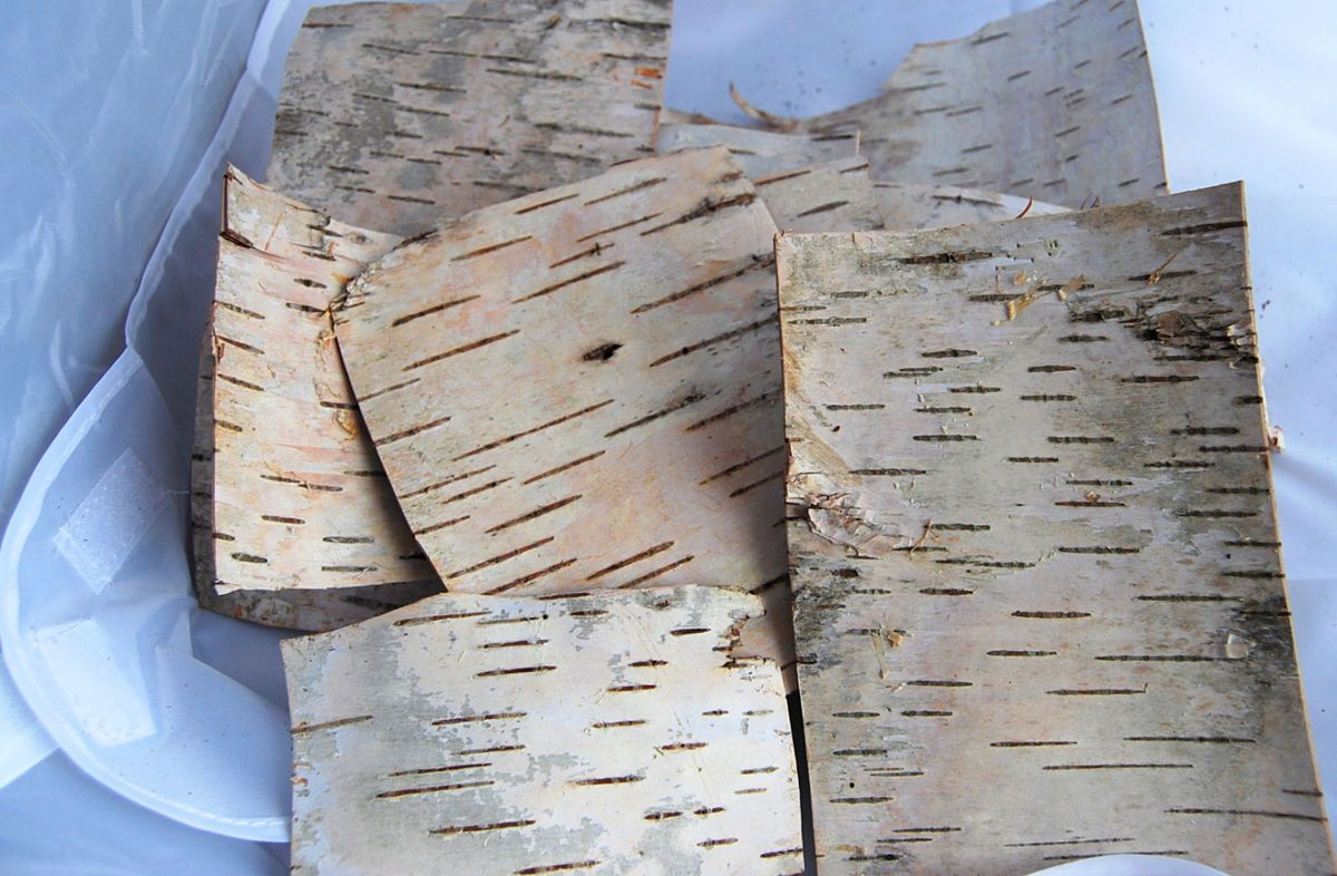Birch Bark Sheets 5 Pieces Of Craft Rustic
