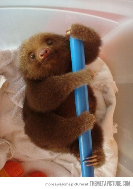 Adorable sloth of the day. pic.twitter.com/TqAe4LFVb8