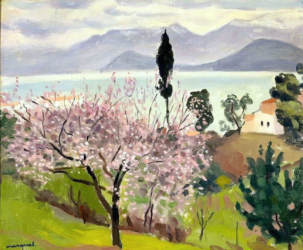 Картинки по запросу cherry blossom