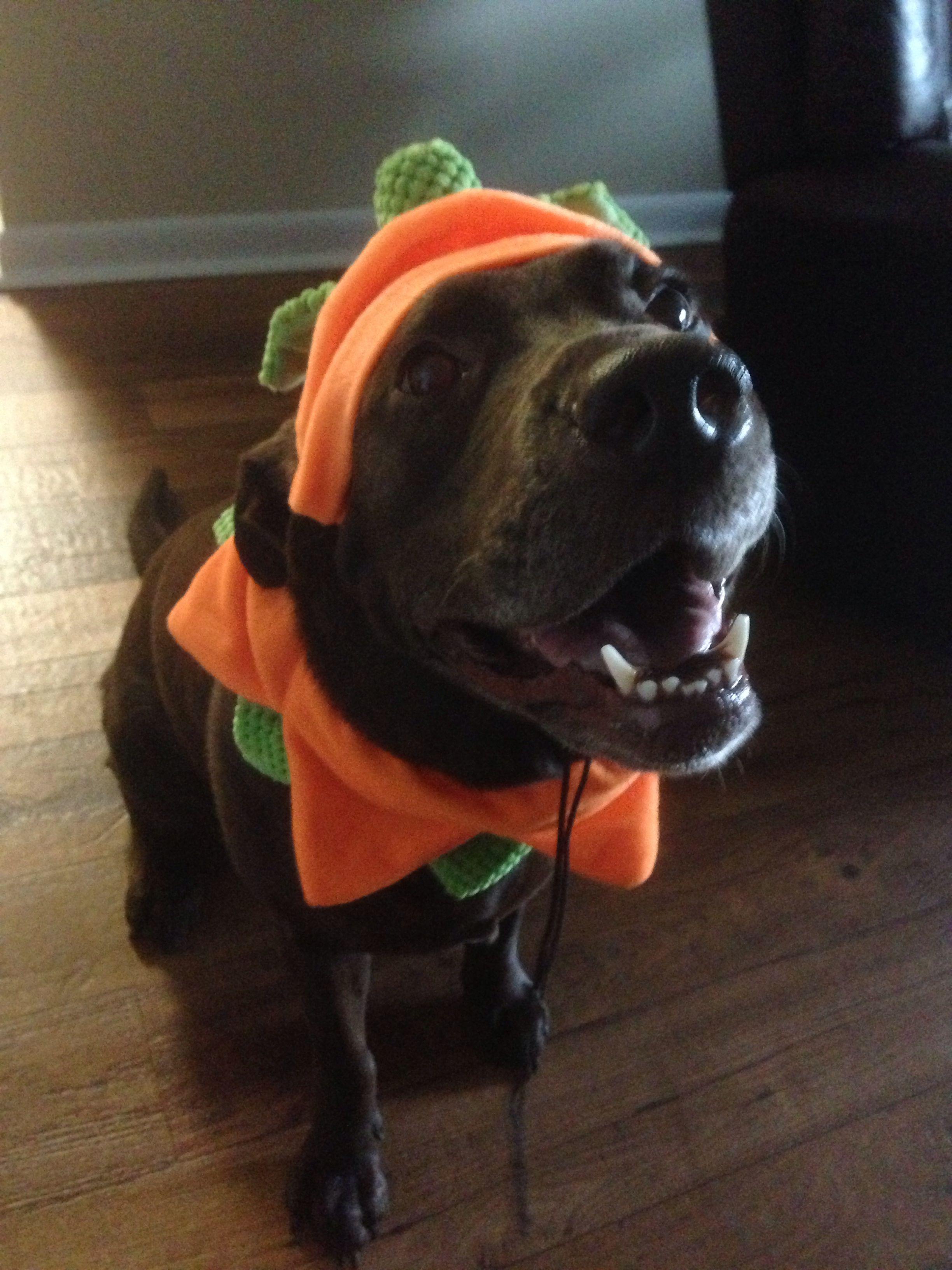 Chocolate Lab Dog Costume Pumpkin Halloween Cute Pet Halloween