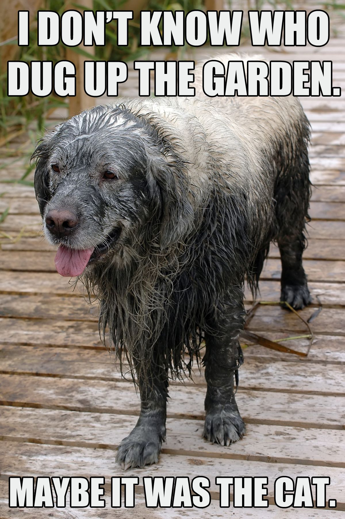 Dog memes, part 5: The good, the sad, and the funny | Dog ... - photo#36