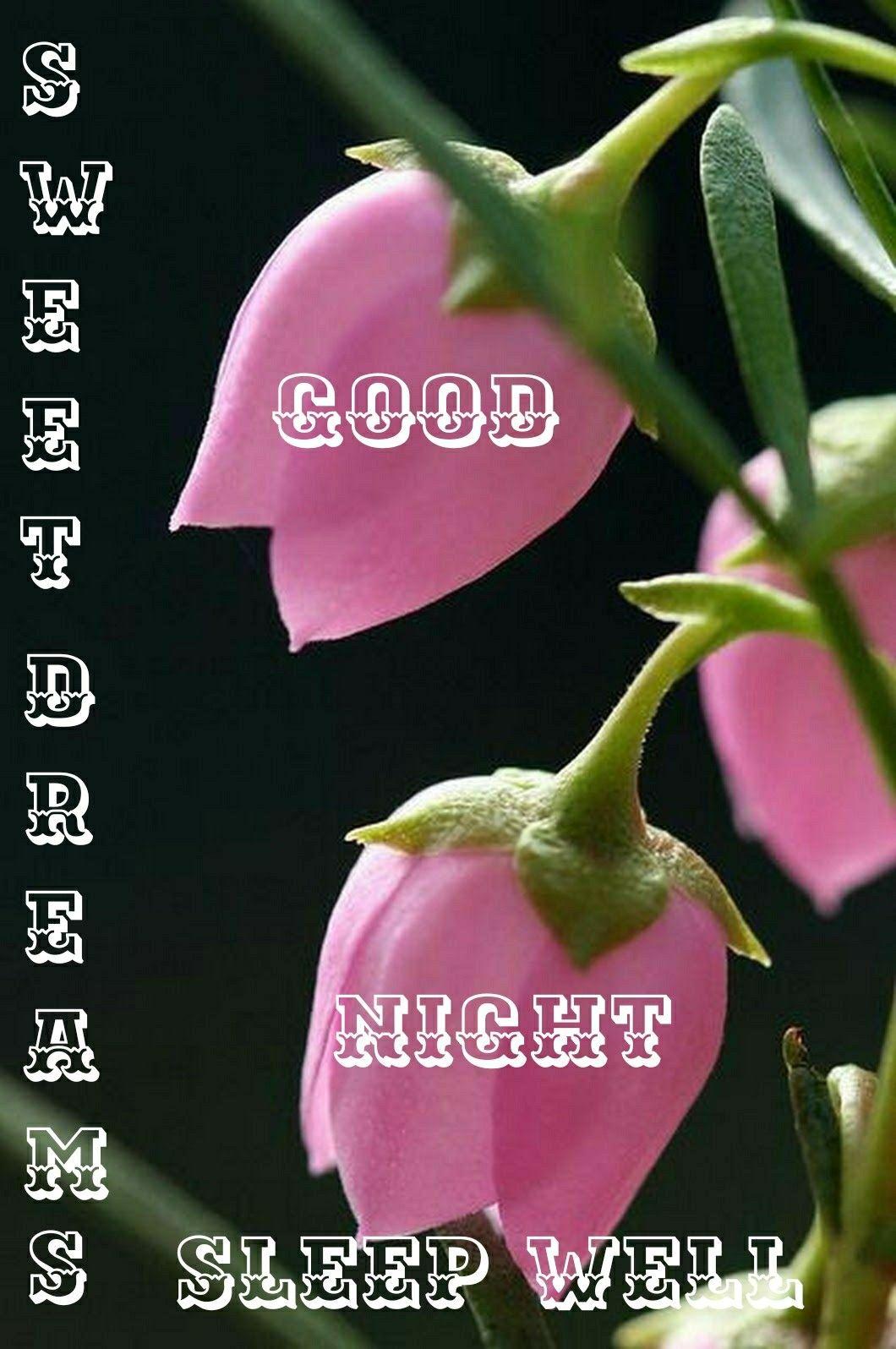 Pin By Jharna Thakkar On Good Nighty Nite Good Night Wishes Good Night Blessings Night Wishes