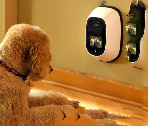 Petchatz Keeps You And Fido In Constant Contact Your Dog Cool Pets Dogs