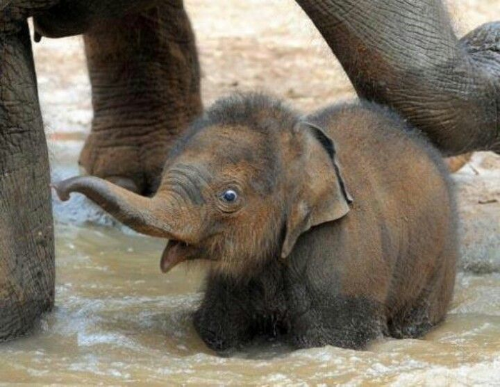 Silly baby elephant!