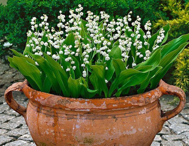 Fiori per balcone all\'ombra: quali fiori coltivare sul balcone ...