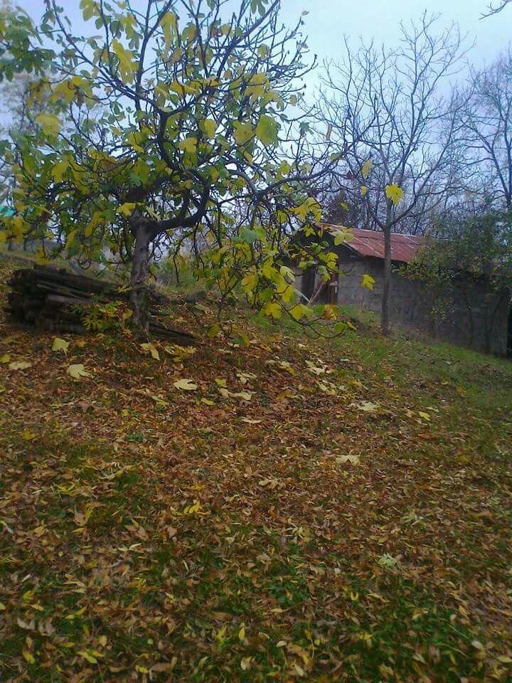 بيعة الرضوان Plants Tree Foliage
