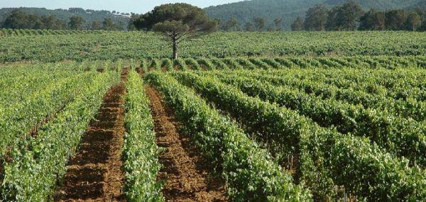 Il vino del sabato: La Toscana in rosa: la Fattoria Casabianca e il suo Sangiovese in rosa - Vino - World Wine Passion