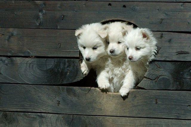 Adorable. Simply adorable.... | Милые собаки, Смешные ...