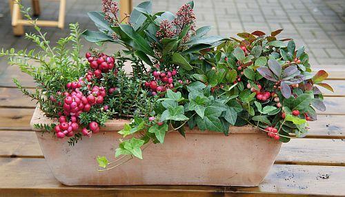 bloembakken in de winter google zoeken jesenn kvetin e pinterest blumenk sten. Black Bedroom Furniture Sets. Home Design Ideas
