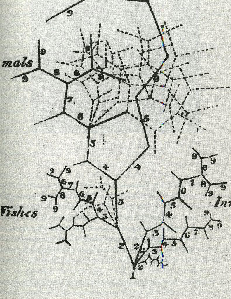 Martin Barry | Tree of animal development (1837)