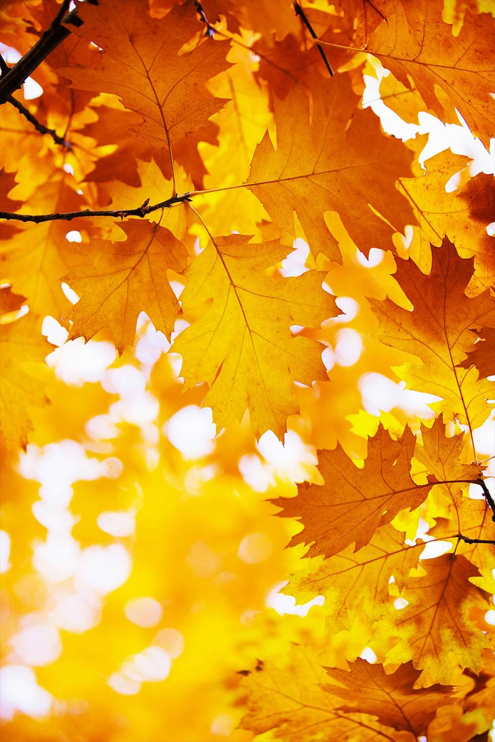 Yellow Leaf Wallpapers Wallpapers