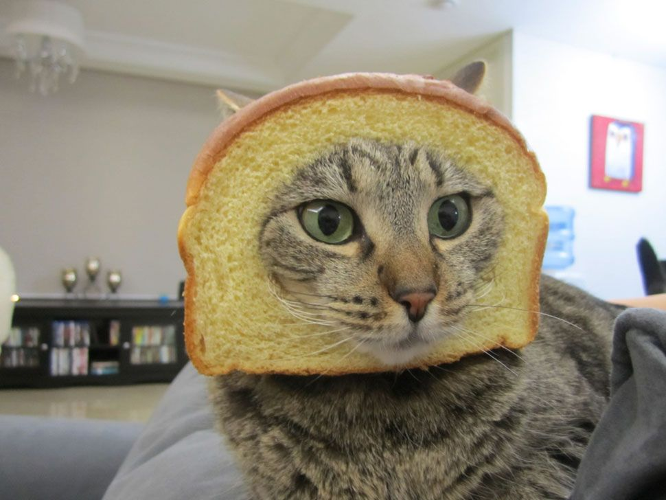 cat breading in action bad kitty southpark boingboing
