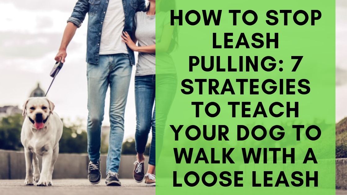How To Train Your Dog To Walk Beside You On A Leash Training Your Dog Your Dog Dogs