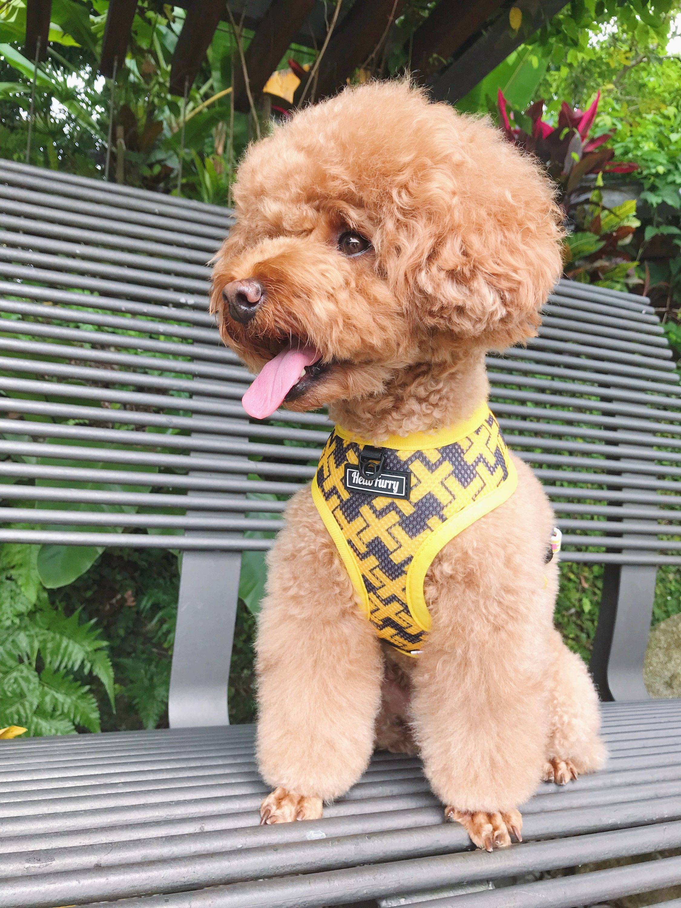 Visit Us At Www Hellofurry Com Customized And Personalized Dog Cat