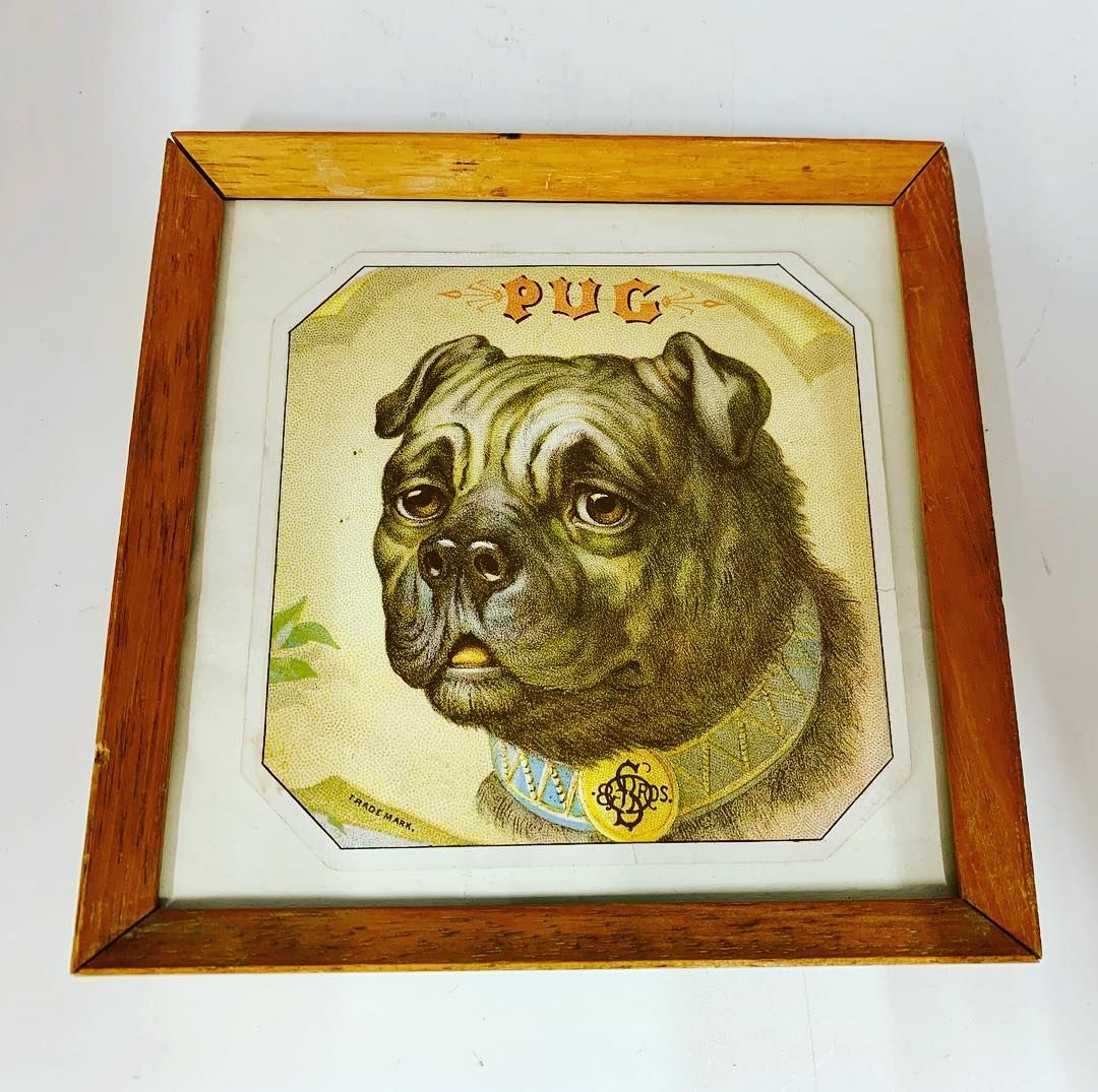 Pug Dog Print For Sale At Www Theantiqueseller Co Uk