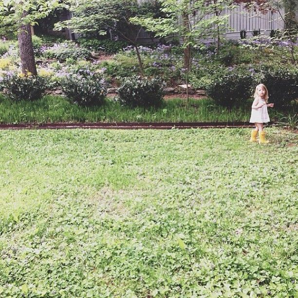 picking flowers for @aubreymccoy (it's his birthday) and watching the birds early this morning. - @bleubird- #webstagram