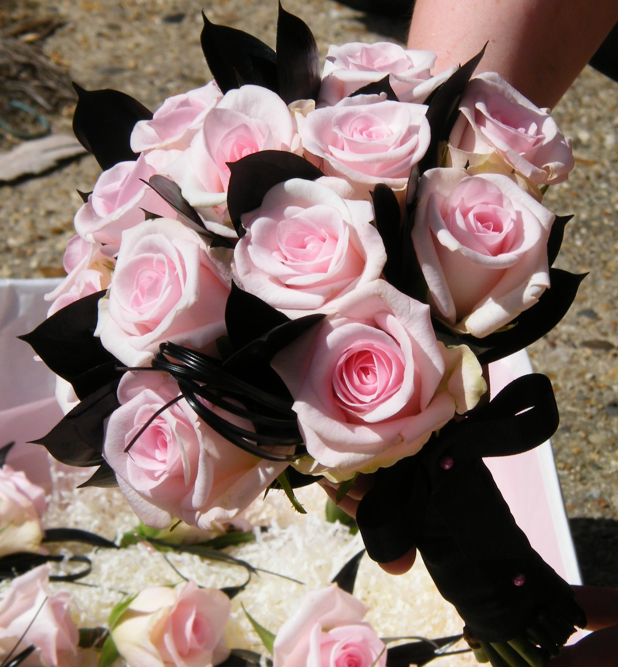 Soft Baby Pink Roses with Black accent foliage