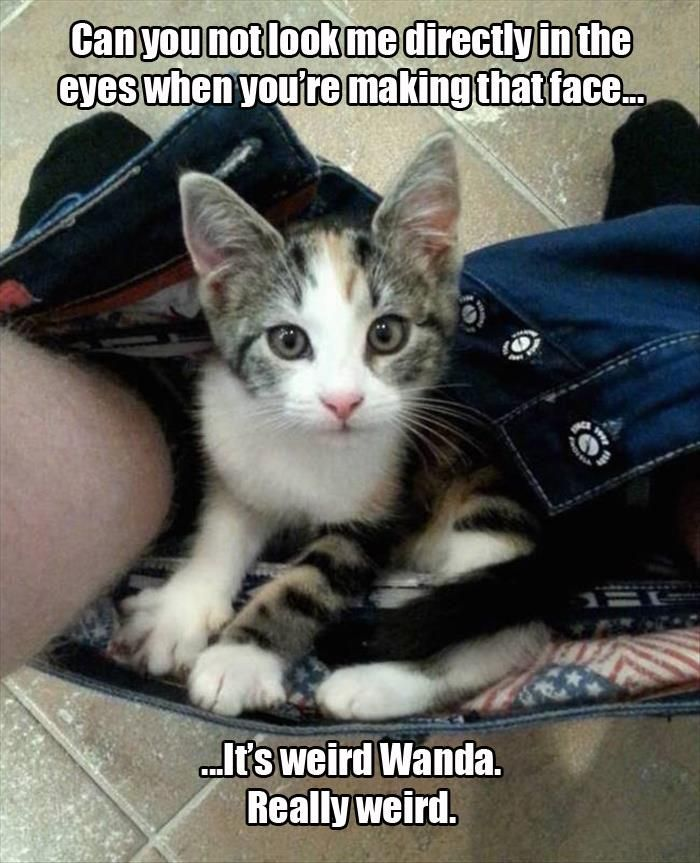 What Your Pets Are Really Thinking While They Watch You Go To The Bathroom 20 Pics Pets Funny Cat Pictures Animals