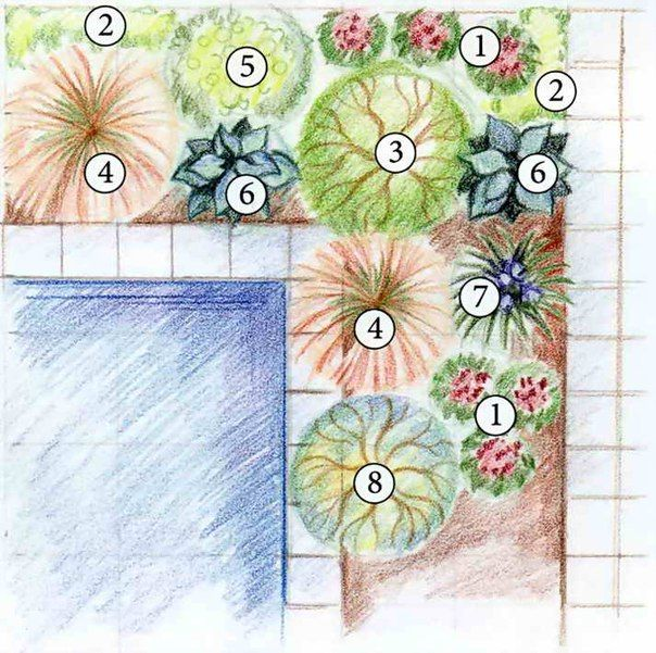 Схема оформления пруда 1 — чемерица черная (Veratrum nigrum); 2 — манжетка мягкая (Alchemilla mollis); 3 — ива розмаринолистная (Salix rosmarinifolia); 4 — щучка дернистая (Deschampsia cespitosa), сорт Goldschleier; 5 — молочай болотный (Euphorbia palustris); 6 — хоста (Hosta), сорт Color Glory; 7- ирис сибирский (Iris sibirica); 8 — ива шерстистая (Salix lanata)
