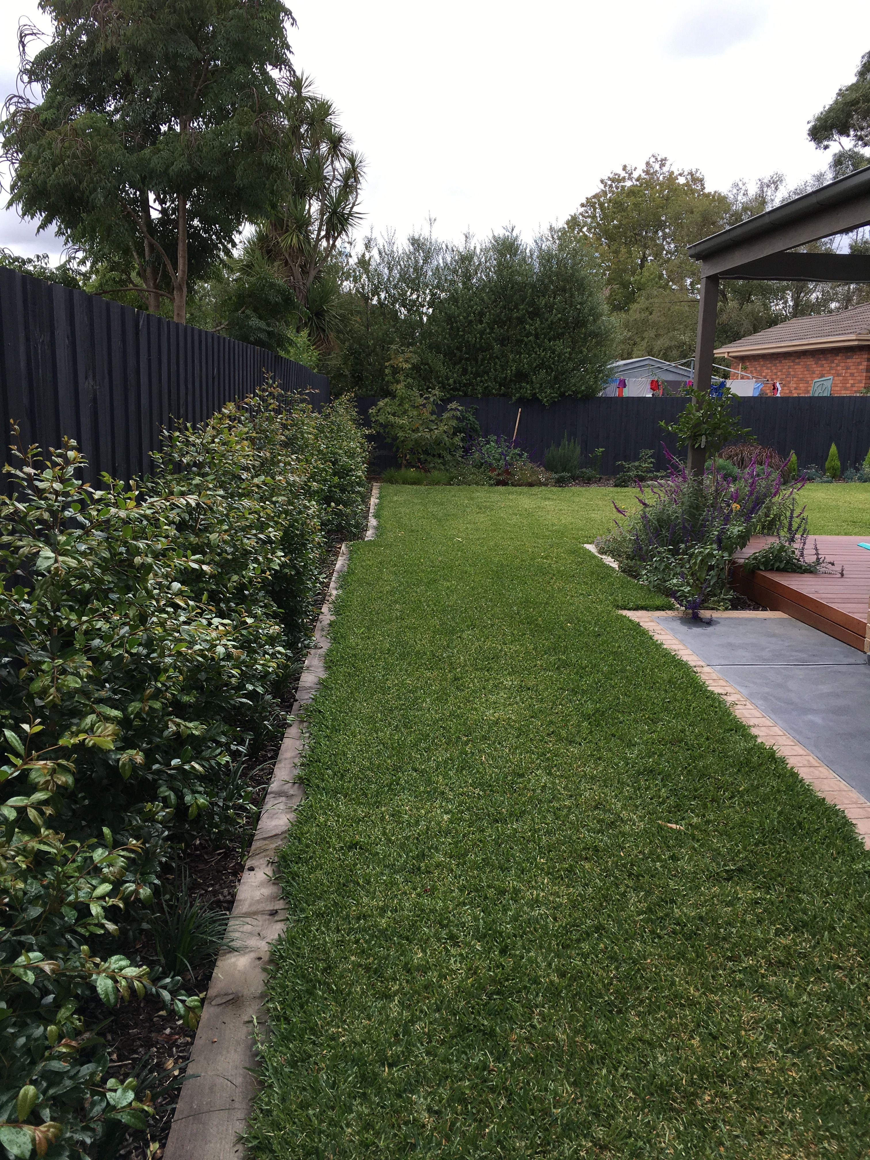 Syzygium Paniculata Backyard Bliss Florida Landscaping Backyard Landscaping Designs Outdoor Gardens