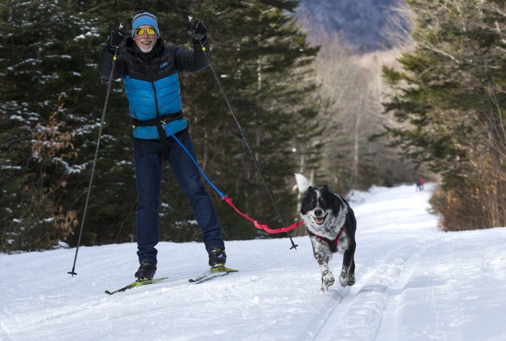 Nordic ski center offers rare rental for dog owners Dog