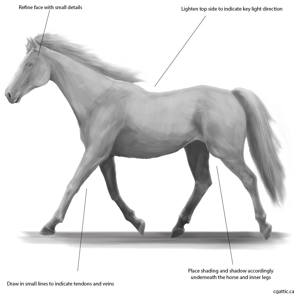 How To Draw A Horse: Straight Forward Steps To Creating An Elegant Horse  Drawing!
