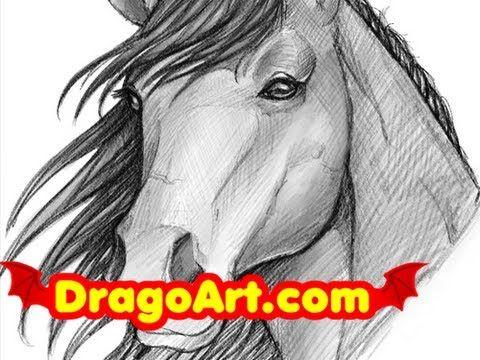 Pin On Drawing Horses