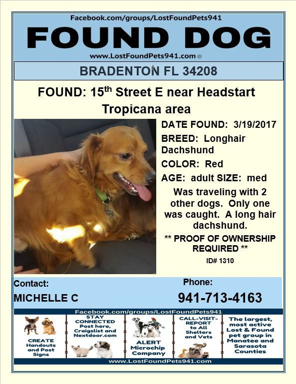 Do You Know Me Found Dog Dachshund Lost Lostpetservices