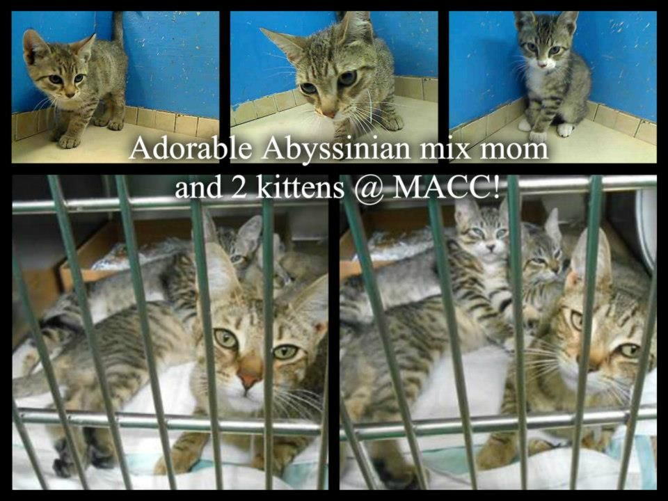 EMERGENCY!!! MOMS & KITTENS WILL BE KILLED/EUTH TOMORROW