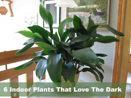 Low Light Indoor Plants Bathroom Pinterest Low