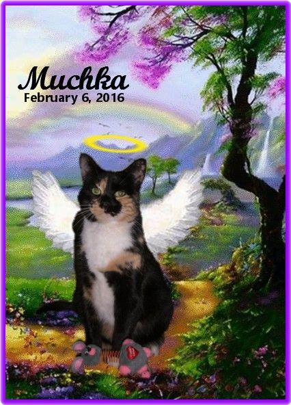 #OTRB #RAINBOWBRIDGE Beloved MUCHKA - In Loving Memory (Memorial #2)