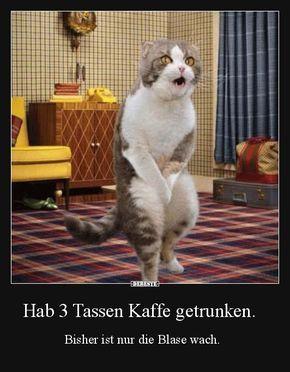 Besten Bilder, Videos und Sprüche und es kommen täglich neue lustige Facebook Bilder auf DEBESTE.DE. Hier werden täglich Witze und Sprüche gepostet! #funnykittens