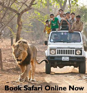 Book Safari Online Now Gir Forest National Park Tours