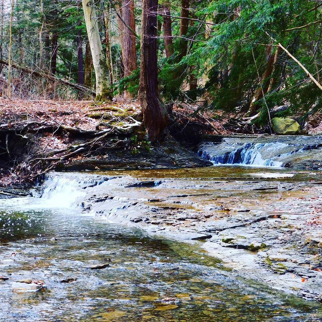 Double falls Chestnut Ridge #ChestnutRidge #OrchardPark #wny #waterfall