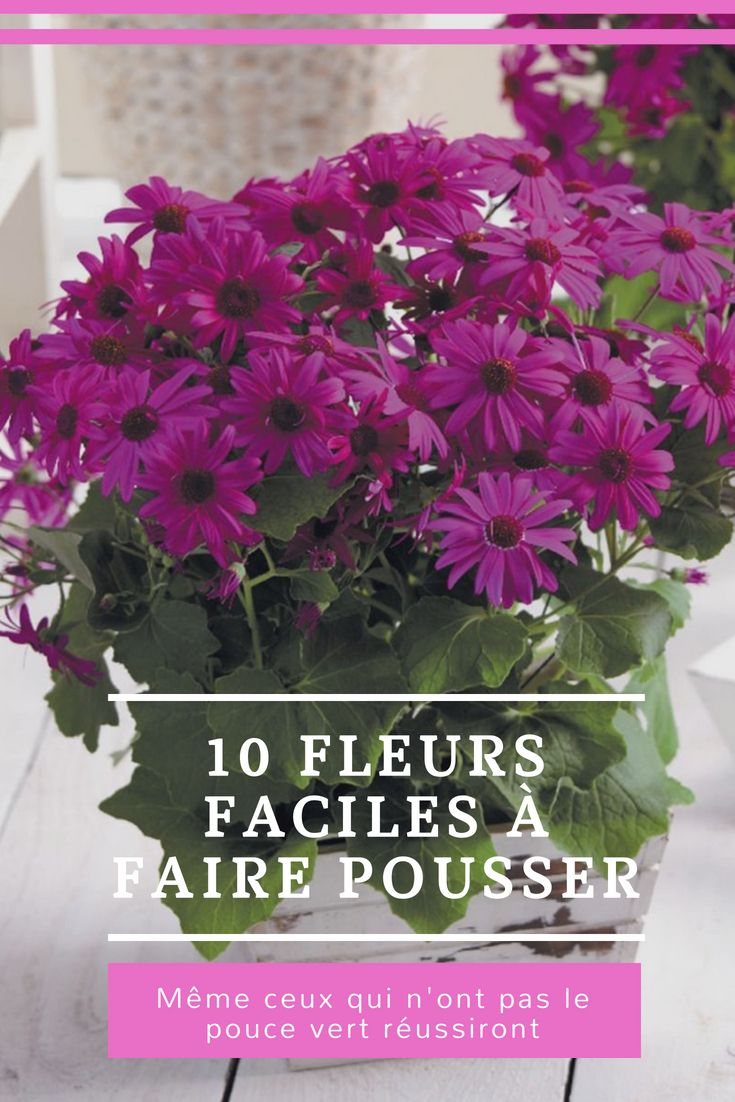100 Fantastique Suggestions Fleur Facile A Faire Pousser
