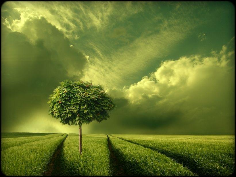 grün,,,, - Bild & Foto von Veronika Pinke aus Landschaften ...