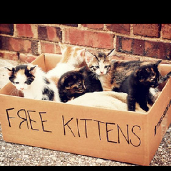 Homeless Cute Animals Kittens Animals