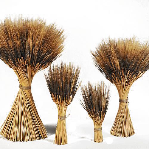 wheat sheaves blackbeard thanksgiving