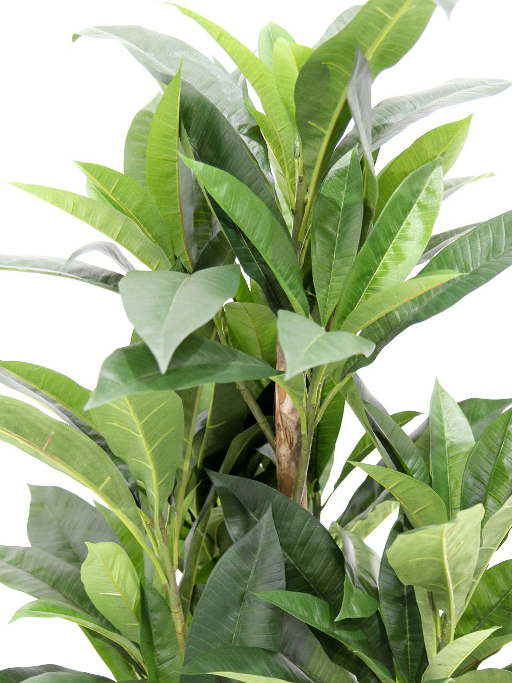 Large Leafy Green Plant Plumeria Event Prop Hire