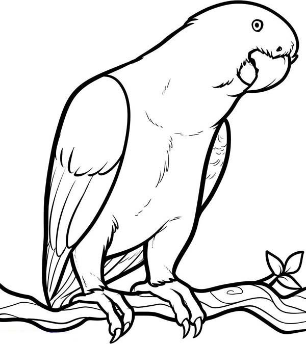 Parrot Looking for Food Coloring Page Bird coloring