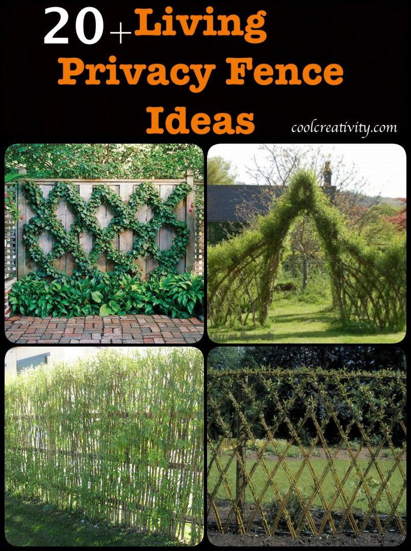 Charmant 20+ Living Privacy Fence Ideas