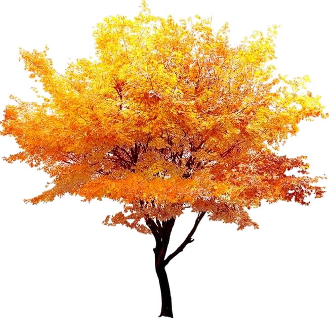 Fall Tree Png Background Image Png Mart Autumn Trees Background Images Cool Landscapes