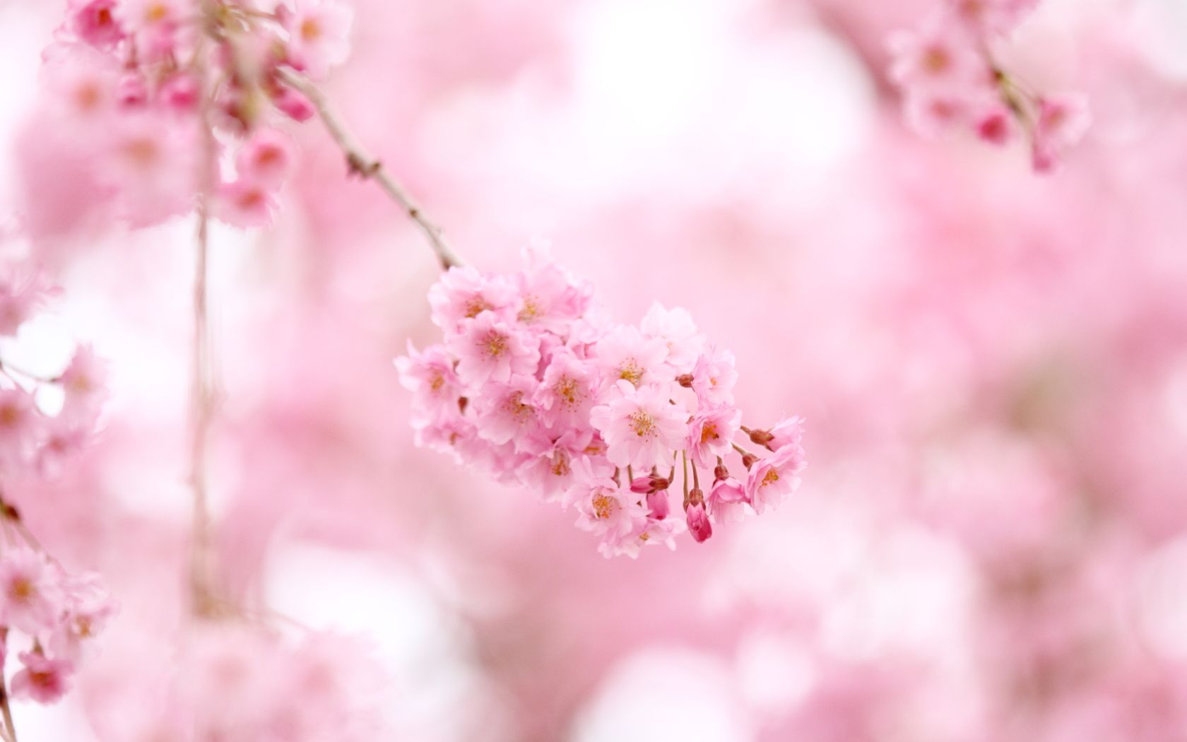 Inspiration Who Does Not Like Natural Stone Or Is Too Expensive Should Look At The Offer Of The Spring Wallpaper Cherry Blossom Wallpaper Flower Aesthetic