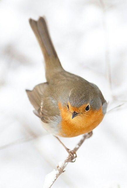 Pin Von Anaisi Lee Auf Animal Life Vogel Als Haustiere Schone Vogel Vogel Kunst