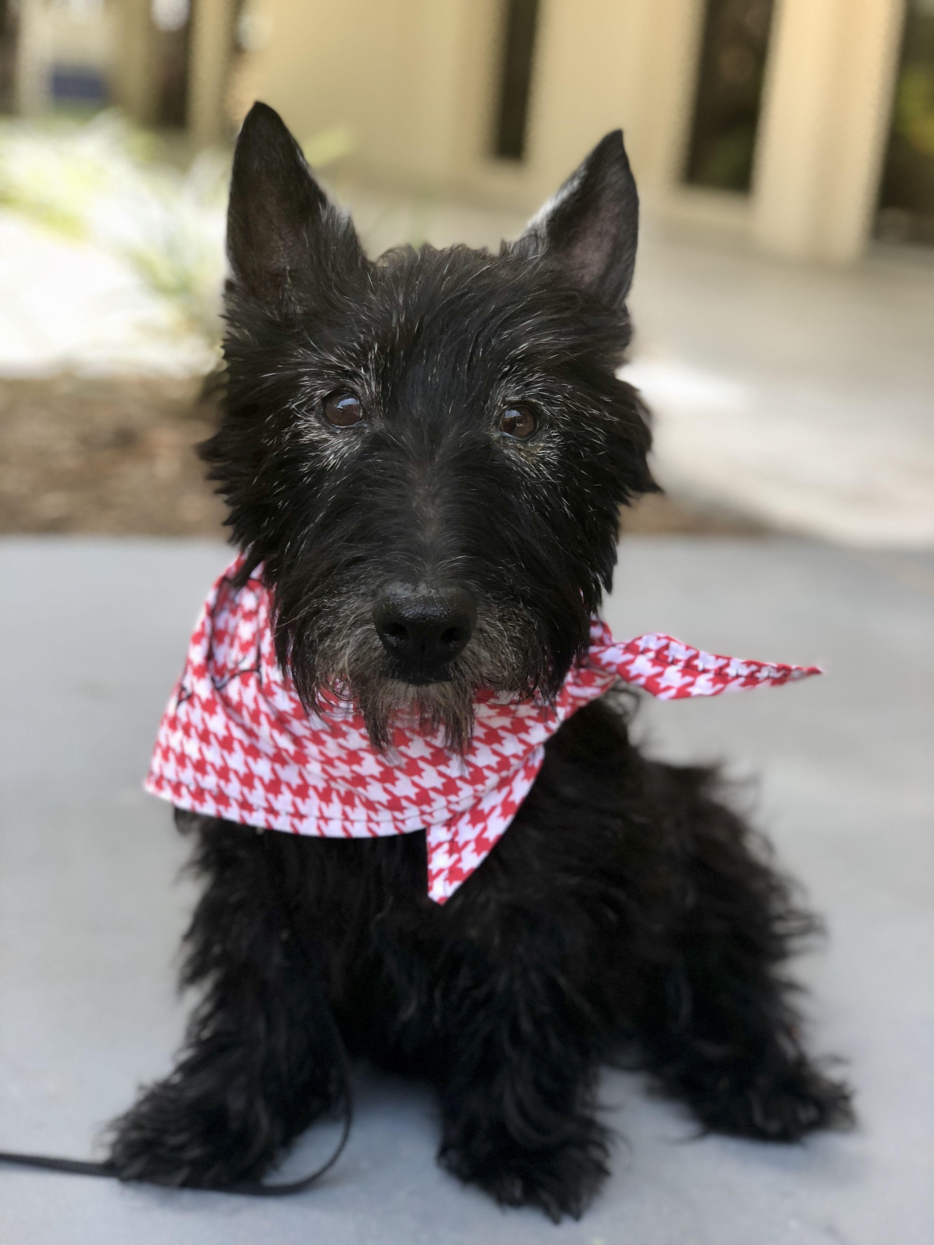 Meet Daisy Animal Shelter Design Small Dog Adoption Humane Society Dogs