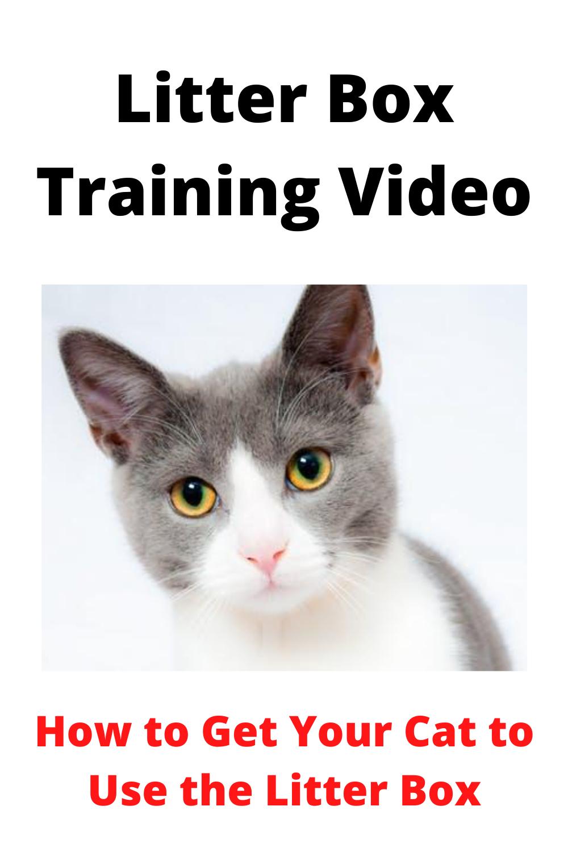 Litter Box Training Video In 2020 Cats Cat Biting Litter Box