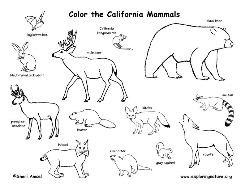 Week 1 Science Biomes Scrublands Dibujo De Animales Dibujos
