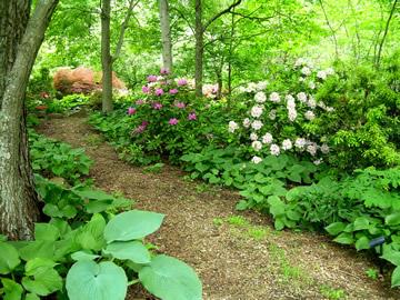 Woodland Gardens Woodland Garden Shade Garden Woodland Plants