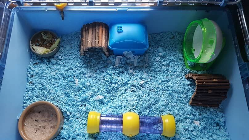 Cleaning Your Hamster Cage Hamster cage