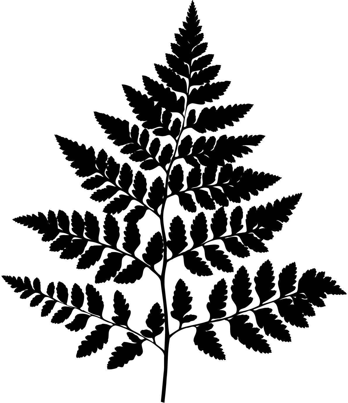 Fern Plant Tattoo